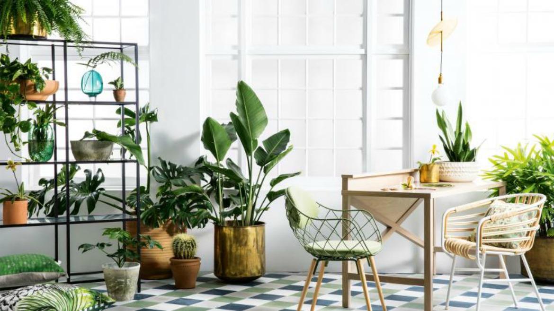 spring-botanicals-indoor-plants-greenery-expert-tips-sam-mcadam-cooper-joseph-gardner-danielle-selig-sept-15-20150915124112-q75,